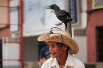 A local of La Trinidad in Benguet is seen with his pet crow on top of his cowboy hat.