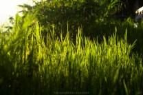 Damp Shades of Green