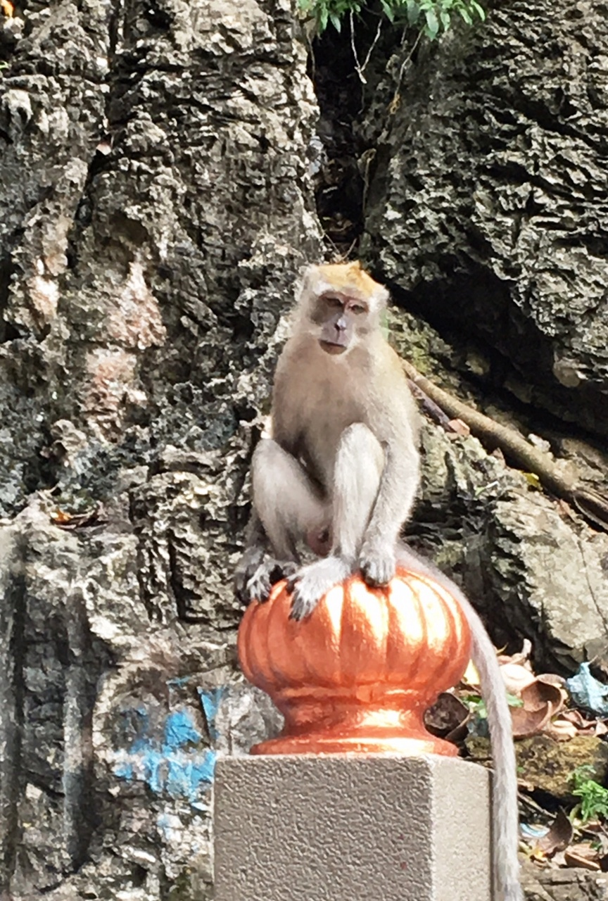 Monkey outside of Batu cave