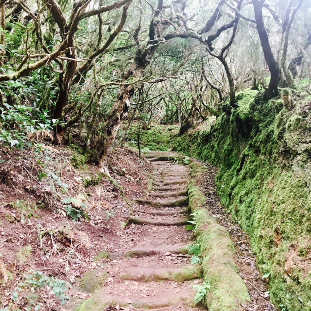 A hike through the forest of Tenerife