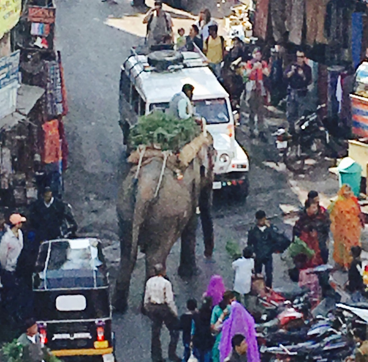 An elephant causing a traffic jam