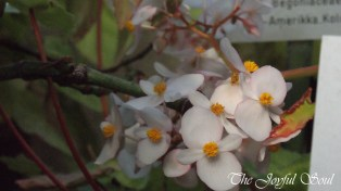 Botanical Gardens - Part 1/3 - Image 15/18