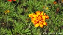 Botanical Gardens - Part 3/3 - Gallery