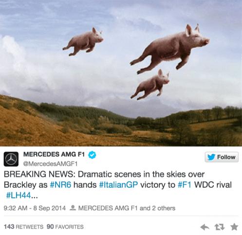 Pigs in Brackley