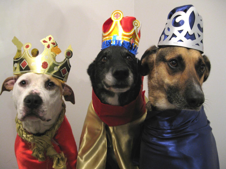 dog happy new year