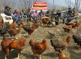At Scientist-Press meet, KVK-G'bal unveils Horti-Poultry Model