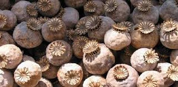 2 arrested with 30 kg poppy in Jammu