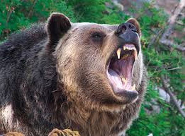 Shepherd killed in bear attack in Ramban district