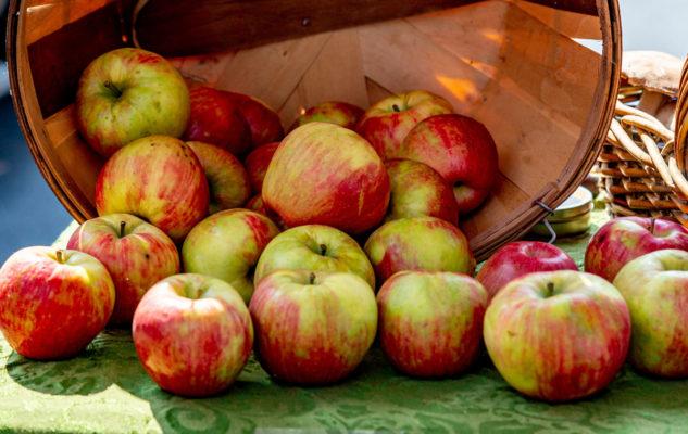Kashmir needs more cold storage units for boosting fruit industry