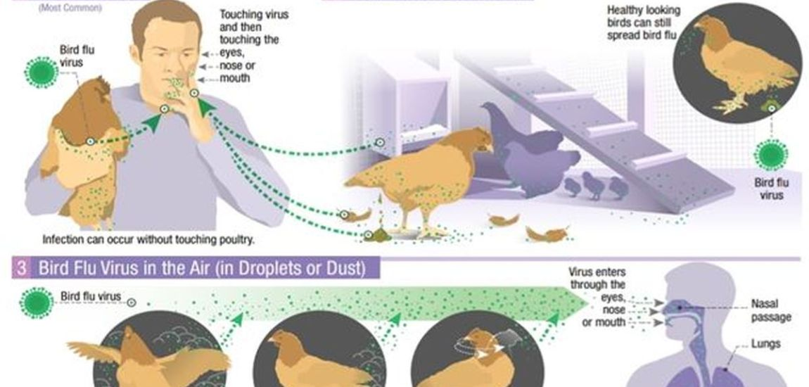 BIRD FLU OUTBREAK AND POSSIBLE HUMAN INFECTIONS