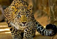 7-year-old girl mauled to death by leopard in Reasi