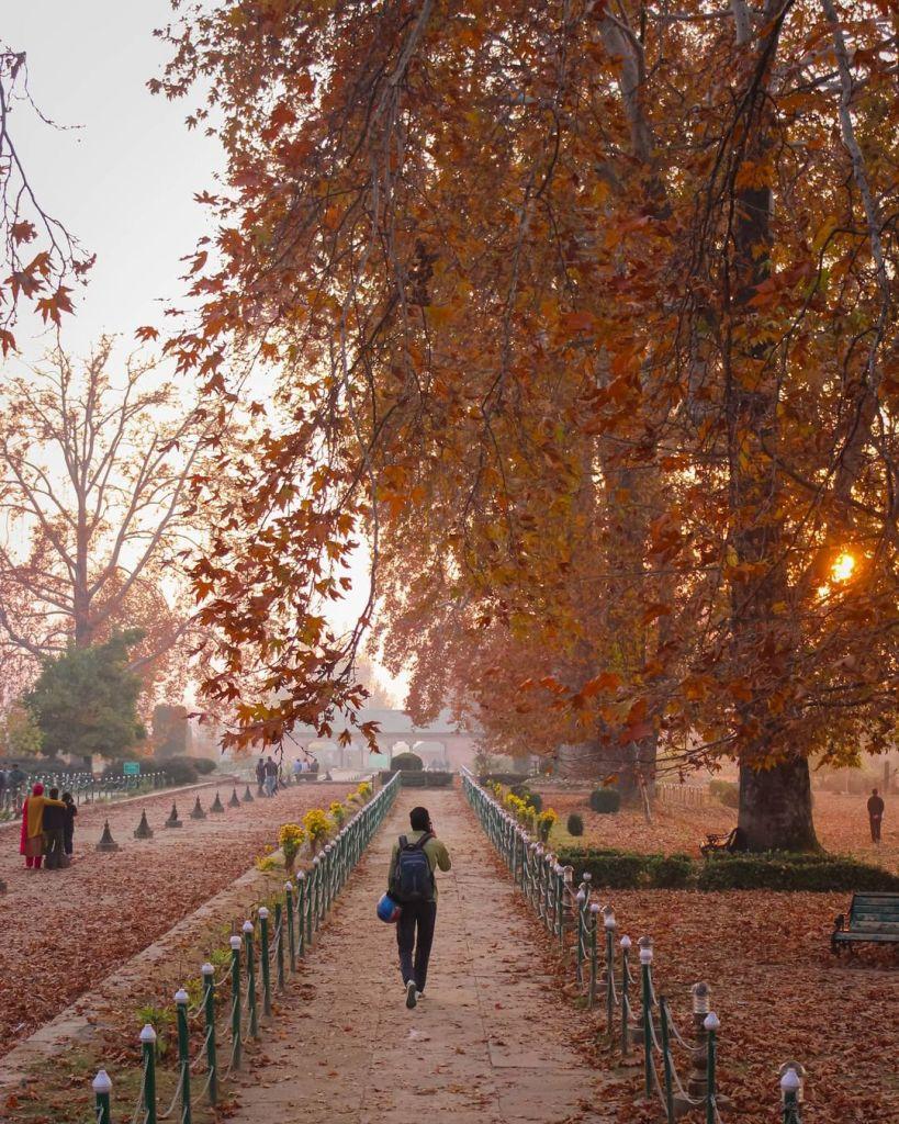 Autumn In Kashmir