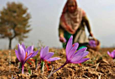 what kashmir is famous for