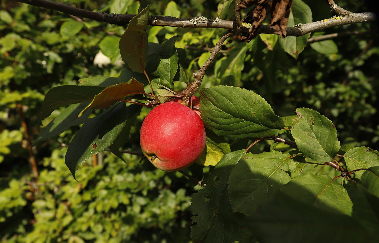 Best Fruit Trees for Warm Winter Climates