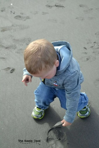 The little man finding Sand Dollars. Sand Dollars are interesting they look like sea shells when we find them. Growing up I saw a couple sand dollars and thought they were very rare. thekeeledeal.com