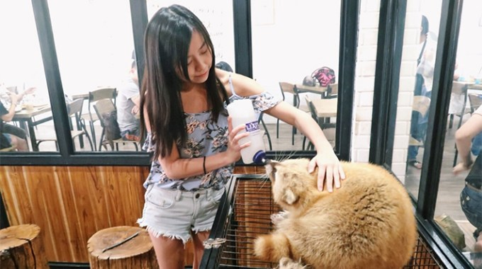 Bangkok Cafe Review: Little Zoo Cafe Siam Square (their 2nd outlet)