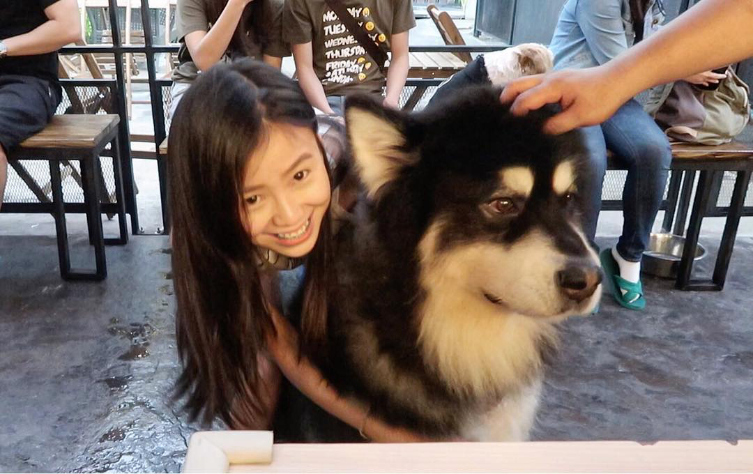 3d8afaedb0c Big Dog Cafe, Bangkok: Play With Dogs That Are Bigger Than Humans!