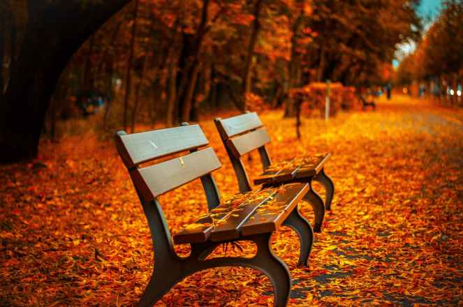 autumn avenue bench fall for bucket list post