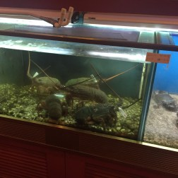 Crab and Lobster Tank