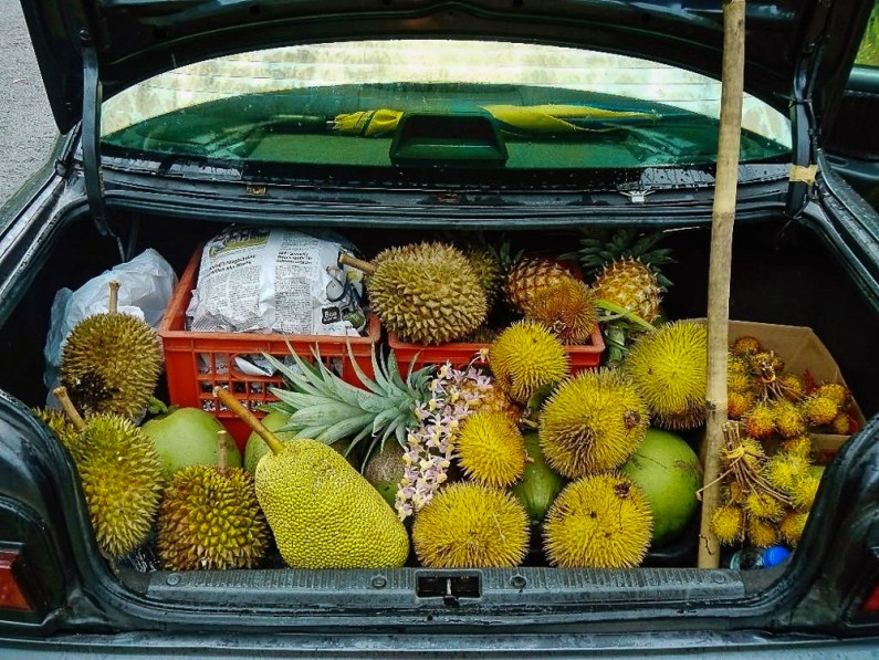 Jackfruit, pineapple, and durian
