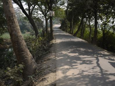 Tree-lined road in Demra-Narayanganj– Handmade Textiles of Bangladesh