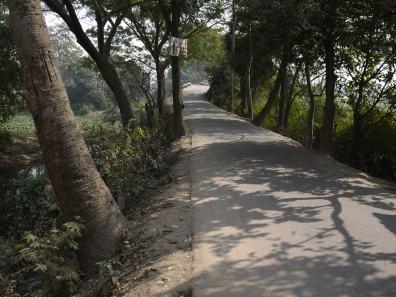 Tree-lined road in Demra-Narayanganj– Handmade Textiles of Bangladesh