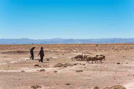 German, Quechua-Aymara farmer in Toledo, near Oruro, supplies AndiArt with fine alpaca, sheep and llama wool yarn. He owns 80 llamas and 600 sheeps.