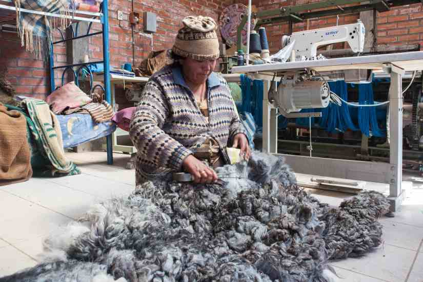 German, Quechua-Aymara farmer in Toledo, near Oruro, supplies AndiArt with fine alpaca, sheep and llama wool yarn. He owns 80 llamas and 600 sheeps. Forces : ciseaux de berger pour la tonte des mountons Hand shears used for shearing llamas and sheeps Ilaria is cutting parts of the fleece with hand shears, for spinning