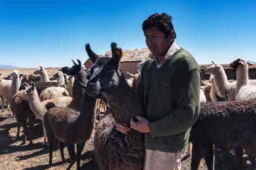 German, Quechua-Aymara farmer in Toledo, near Oruro, supplies AndiArt with fine alpaca, sheep and llama wool.