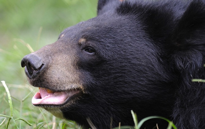 Animals Asia, Jasper the Bear