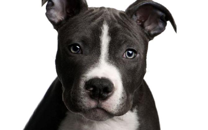 Doggie CPR