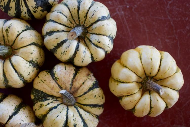 Autumn Squash Ripe for Stuffing!