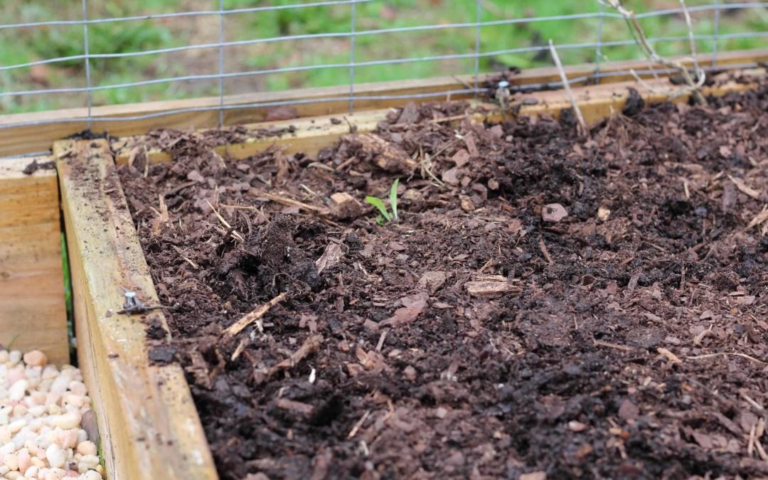 3 Steps to Winterize Your Kitchen Garden