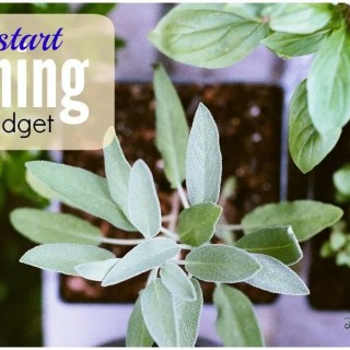 Gardening on a Budget: Seeds and Plants
