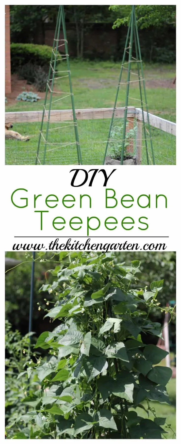 Bean Teepee