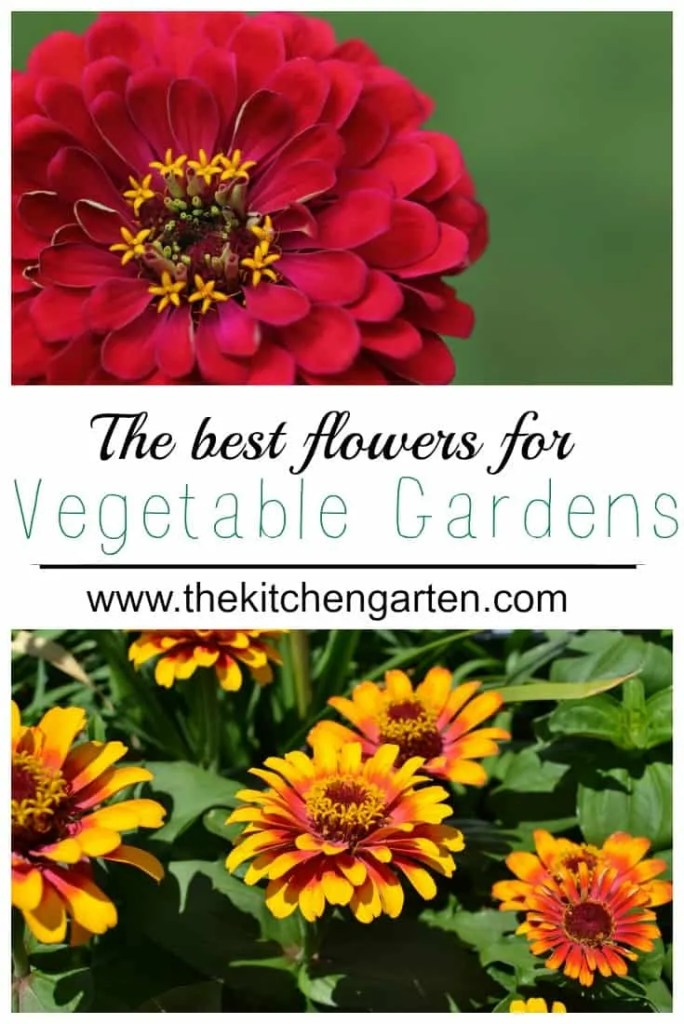 vegetable garden flowers