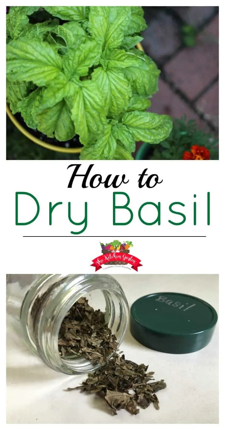 Don't let fresh basil go to waste. Dry fresh basil to use for months to come!