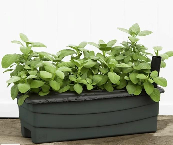 earthbox junior full of greens
