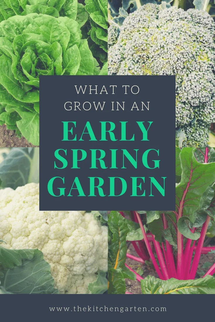 Not sure what to grow in your early spring garden? Check out our list of vegetables that love the warm(ish) days and cooler nights of early spring.