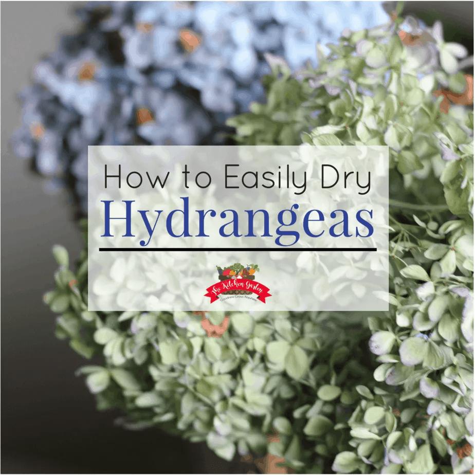 Dry Hydrangeas The Easy Way The Kitchen Garten