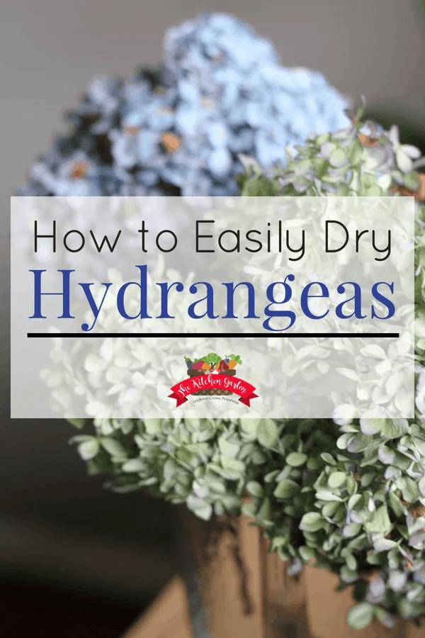 how to dry hydrangeas