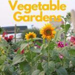 sunflowers in a vegetable garden