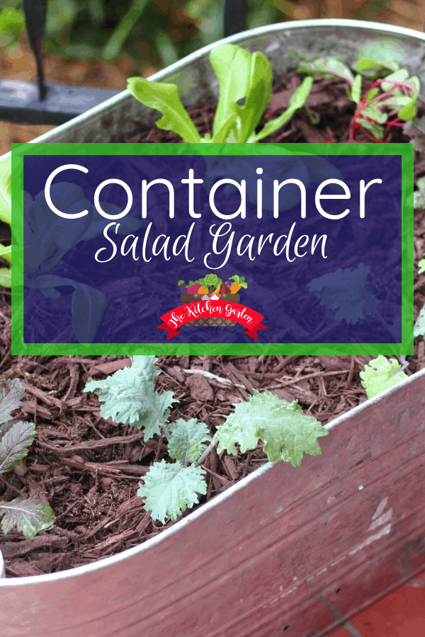 planting a container salad garden