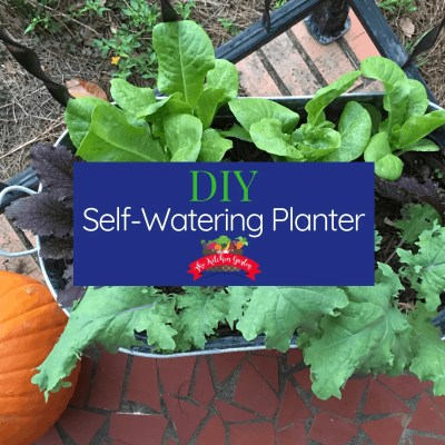 DIY self-watering planter