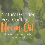 aphids on a plant and info about neem oil
