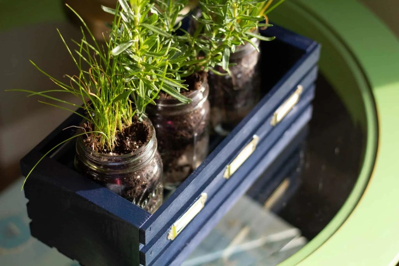top view of three plants in mason jars in a navy blue wooden crate