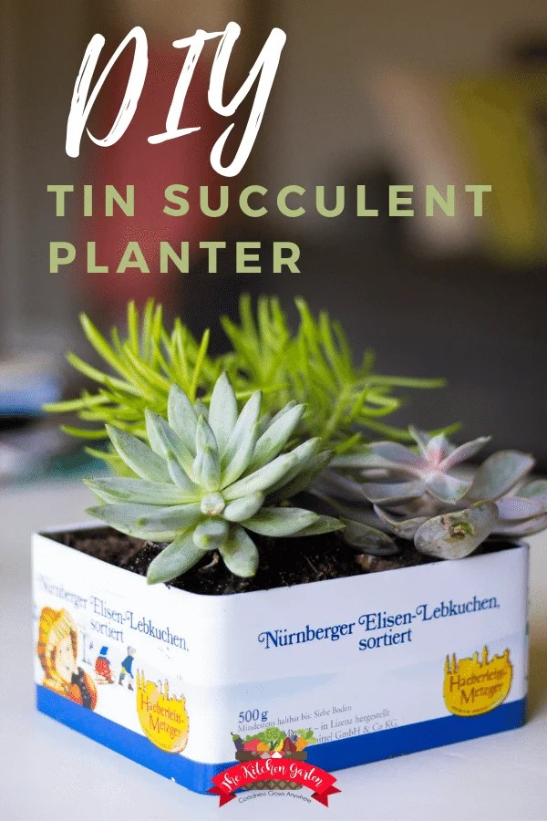 succulents in cookie tin on white table