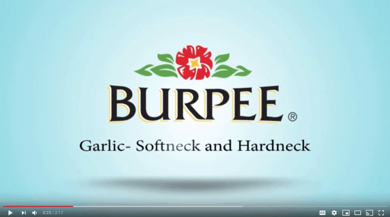 burpee video screen shot