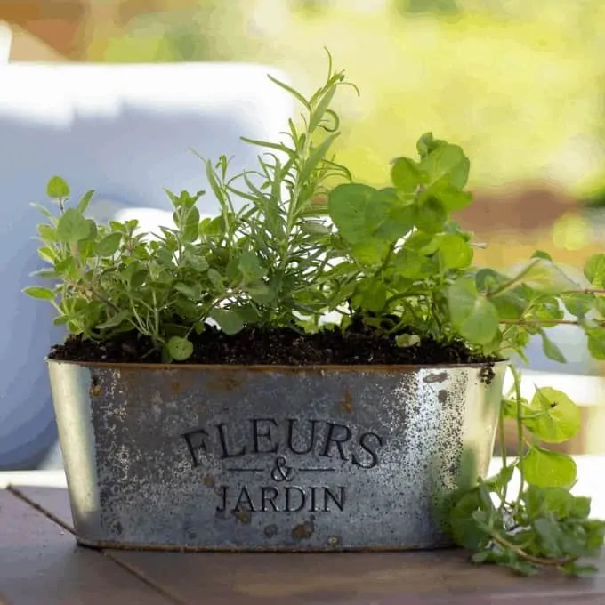 DIY Herb Container Garden