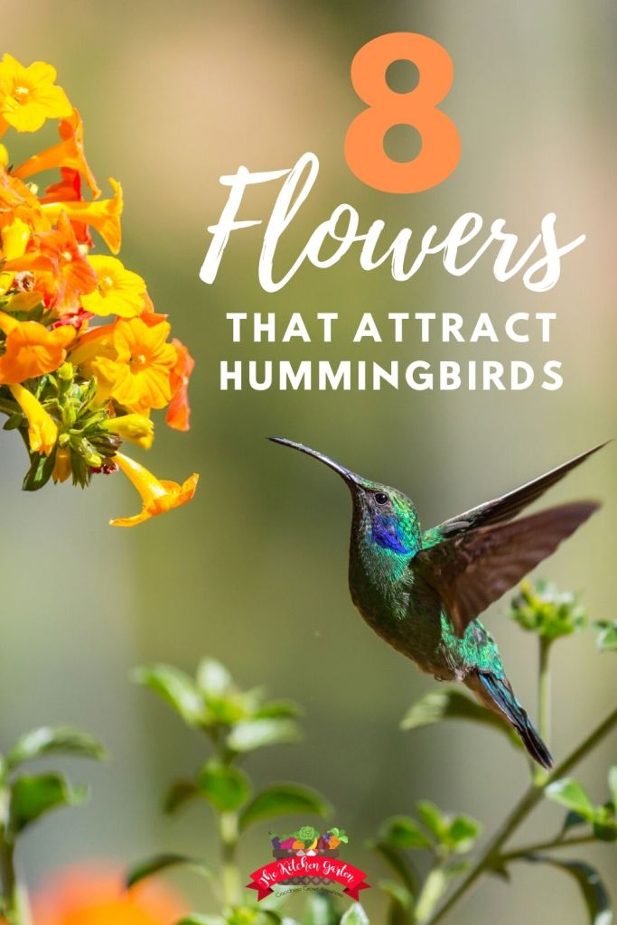hummingbird feeding at flowers